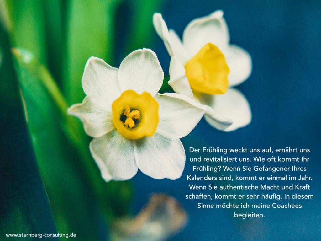 Andrea Sternberg Blogpost Frühling